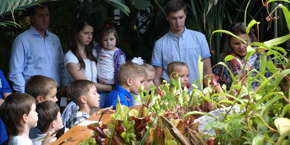 Хищные растения в оранжерее Аптекарского огорода