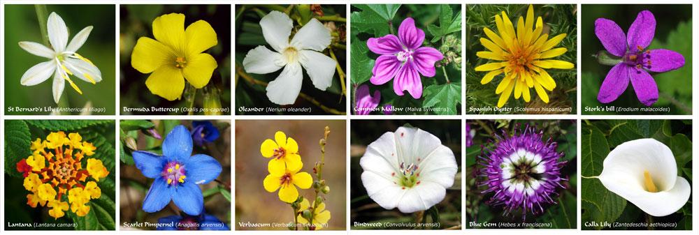 Flower_abc